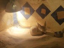 desert fox royalty free stock photo