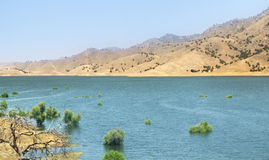 Desert with fresh water lake. Stock Image