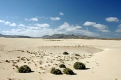 Desert of Fuerteventura in area Corallejo Stock Photo