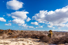 Desert Galapagos Landscape Royalty Free Stock Photo