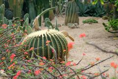 Desert garden. Cacti in a desert garden Royalty Free Stock Photos