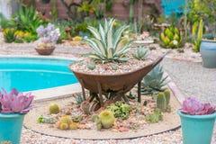 Desert garden agave stock photo