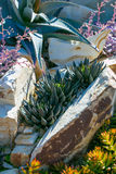 Desert garden with succulents Royalty Free Stock Images