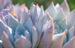 Desert garden with succulents Stock Photo