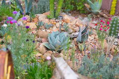 Desert garden with succulents Royalty Free Stock Photos