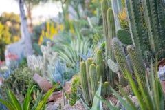 Desert garden with succulents Stock Image