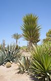 Desert garden with various plants Royalty Free Stock Photography