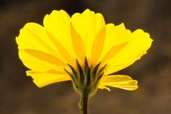 Desert Gold Stock Image