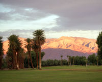Desert Golf Course. Date palms on golf course in Death Valley, CA at sunset with sunlit hills in background royalty free stock image