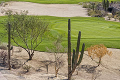 Desert golf course green Royalty Free Stock Images