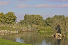 Desert Golf Course Pond Stock Photos