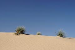 Desert Grass. Grass hassocks on a desert dune in Namibia royalty free stock photo