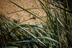 Desert grass Stock Photos