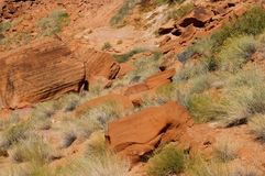 Desert grass. Desert grass on a red sandstone rocks background Royalty Free Stock Photography