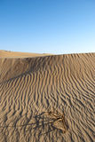 Desert with green. The sandy desert in the west Oman Royalty Free Stock Image