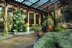 Desert greenhouse with cactii. Plant Life of the American Southwest on Display in Kennett Square stock photo