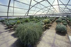 Desert greenhouse experiment at the University of Arizona Environmental Research Laboratory in Tucson, AZ Stock Photo