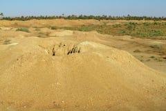 Desert ground dry whell. African landscape, Sahara desert Royalty Free Stock Image