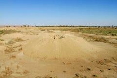 Desert ground whell. Oasis. African landscape, Sahara desert Royalty Free Stock Photo