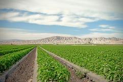 Desert Grove stock photos
