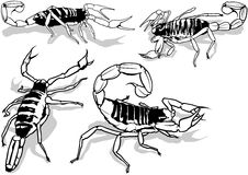 Desert Hairy Scorpion Stock Images