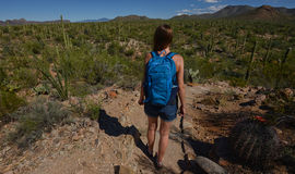 Desert hike with cacti and mountains Royalty Free Stock Photography