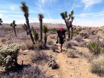 Desert Hiker. A hiker walking along a trail thru the desert Royalty Free Stock Photo