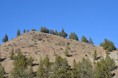 A Desert Hill and Blue Sky in Central Oregon. This is a Central Oregon hill with green trees on the slopes under a blue sky stock photo