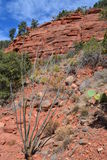 Desert hillside of red rocks and green cactus in S. This photograph was taken in June 2012 in the desert hills around Sedona, Arizona Royalty Free Stock Photos