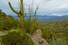 Desert Horizons. Desert landscape at Sagurao National Park, Tucson, Arizona royalty free stock photos