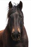 Desert Horse Stock Photography