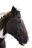 Desert Horses Stock Photo