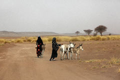 Desert inhabitants with donkeys Stock Photography