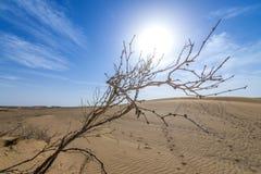 Desert in Iran. Dried shrub on Maranjab Desert in Iran Royalty Free Stock Image