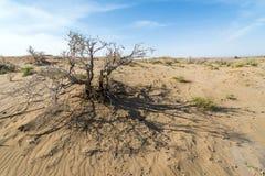 Desert in Iran. Dried shrub on Maranjab Desert in Iran Royalty Free Stock Photo