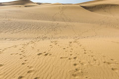 Desert in Iran Stock Photography