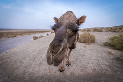 Desert in Iran Royalty Free Stock Photos