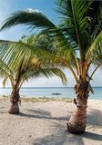 Desert island beach palm trees philippines. Palm fringed white sand beach near malapascua island the visayas philippines stock image