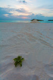 Desert island in the Indian ocean at sunset, Maldives Royalty Free Stock Images