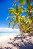 Desert island with palm tree on the beach Stock Photos