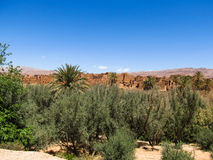 Desert kasbah Royalty Free Stock Photos
