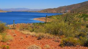 Desert Lake Two. Desert lake with saguaro cactus Stock Photography