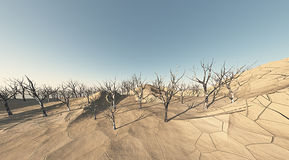 Desert land with dead trees. Desert climate with dry earth and dead trees Stock Photo