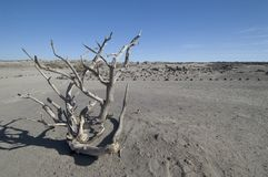 Desert landscape. Dessertic landscape in Ischigualasto, Argentina Royalty Free Stock Photo