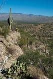 Desert Landscape royalty free stock photos