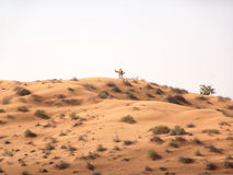 Desert landscape. Desert of arabia stock images