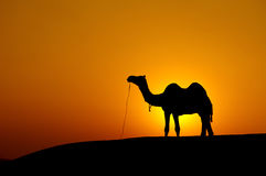 Desert landscape. With camel at sunset stock photography