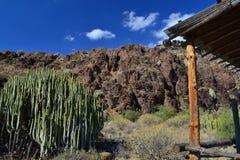 Desert landscape Stock Photography