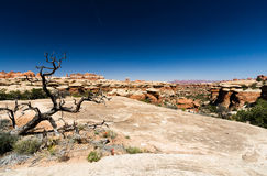 Desert Landscape. Scene in Canyonlands National Park, Utah USA Royalty Free Stock Photos