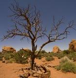 Desert Landscape Stock Photos